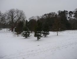 University of Essex Snow 4 by caribbeanpirate