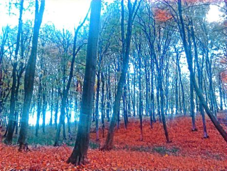 RED LEAFS  by zetaSuceava