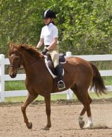 Chestnut 2 by erl-stock