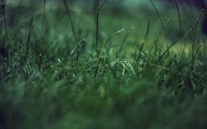 Grass ver.8 by jamalaftab
