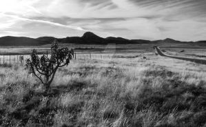 Antelope Flats by hatterfox