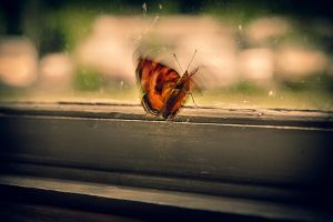butterfly by debagger