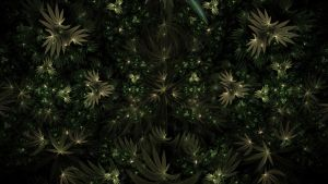 Weed by thargor6