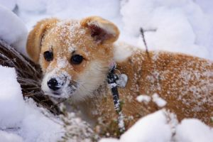 Animal stock 2, Snow face by Lamilie
