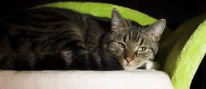 Cat on the couch by PPFotografie