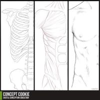Anatomy Resource: Male Upper Body by ConceptCookie