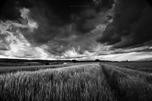 Dark Field by DREAMCA7CHER
