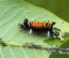 Hatched Caterpillar by natureguy
