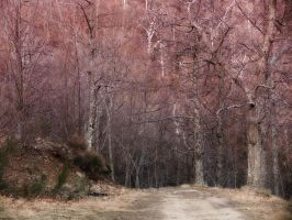 A wood in a mild winter by seianti