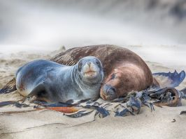 Sea lions by MotHaiBaPhoto