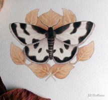 The Clouded Border Moth by JillHoffman