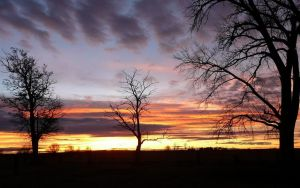 sunset behind bare trees by Beausoliel