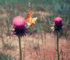 Butterfly Thistle by enterfunnyusername
