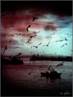 Istanbul and Seagulls by meralguler
