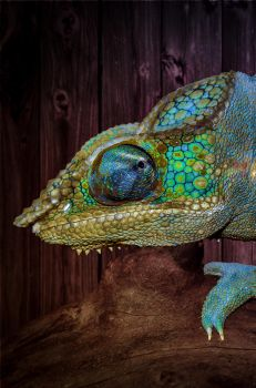 Chameleon by kschmoll