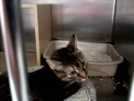 cat from brentwood tn petsmart  part 1 by michelous
