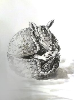 04 Armadillo by Indeed-Aldiss