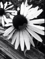 Stuck In Black And White by jjtt41910