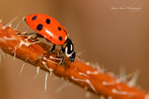 Lady Bug 1 by Mac-Wiz