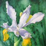 White iris painting - Watercolour Markers by GeeMassamArt