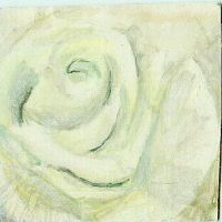 Water Colour White Rose by HollysHobbies