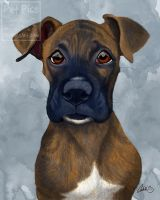 Mose Boxer Portrait by CharReed