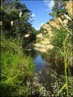 Butterfly Creek (Eastbourne New Zealand) by Galato901