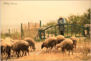 Shepherd and flock by ShlomitMessica