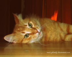 cat in a tone interior by Mari-Ghostly