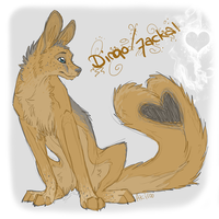 Dingo - Jackal. This person. by Akiroo