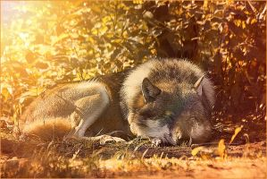 .:Chill Out In The Sun:. by WhiteSpiritWolf