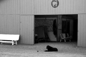 Lonesome Dog by marigrace