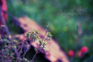 nature by seasfairytale