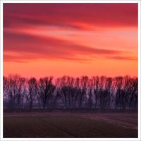 Misty Red by justeline