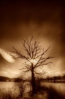 Evening tree by tomsumartin