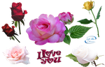 Lovely roses - PNG by lifeblue