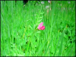 The Little Weed by vetala