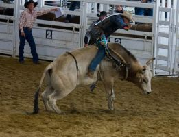 STOCK 2013 Rodeo-167 by fillyrox