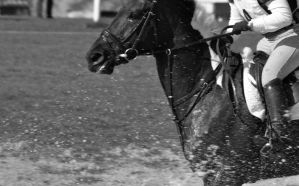 horse Trials 06 by mk-thommo