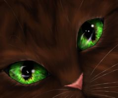 Through Leafpool's eyes.... by Speckledpath