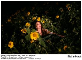 In the Sunflowers.9 by Della-Stock
