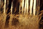 Of Trees and Golden Grass by Serjia