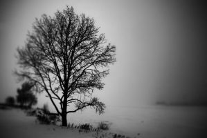 ...dark tree. by square-brain