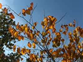 Autumn leaves2 by voider00