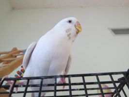 Canon SX50 HS Test: Towering Budgie by Malidicus