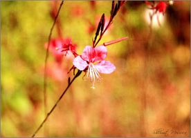 Delicate by ShlomitMessica