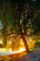 Golden weeping willow by LinsenSchuss