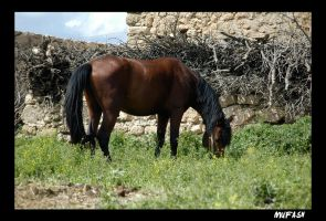 HORSE by mufash