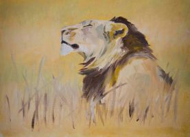 Early morning lion study by Lara-Shychoski