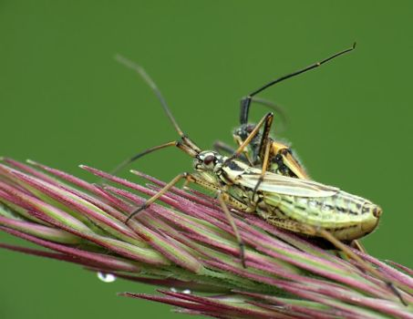 Insects 15 by mateuszskibicki1